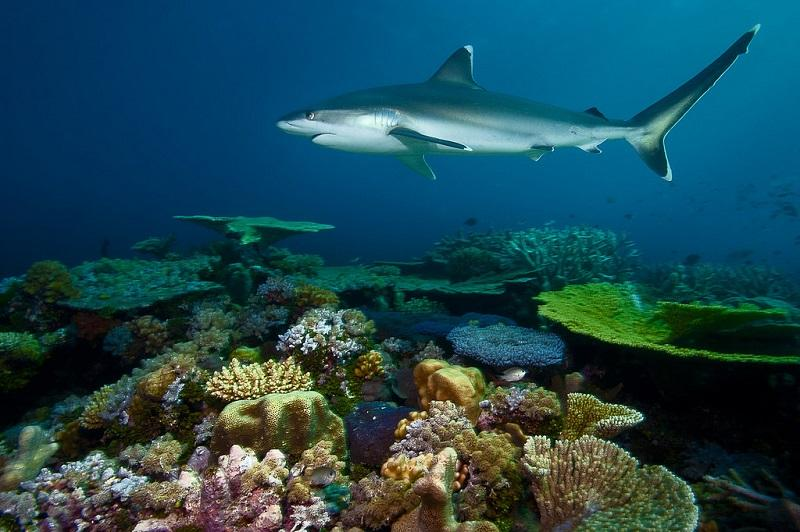 Акула. красота подводного мира