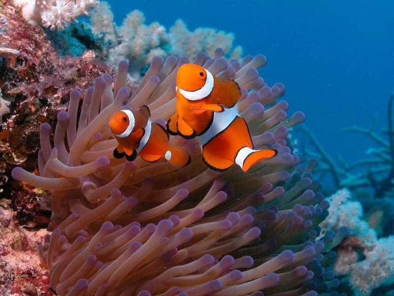 Рыбы. Красота подводного мира