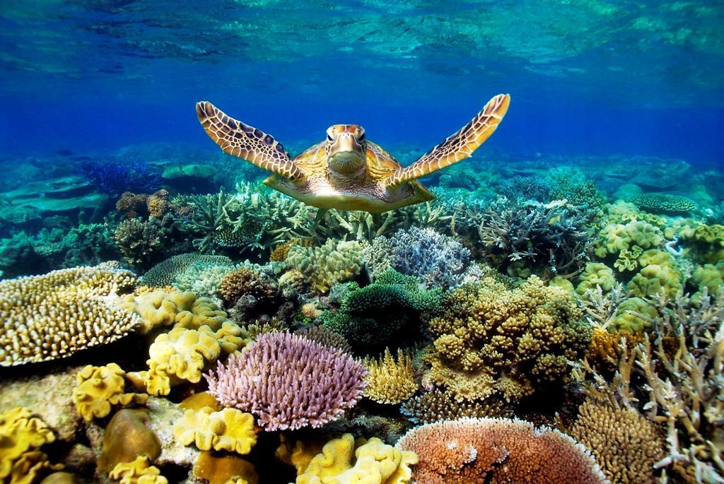 1-Красивое фото рифов под водой