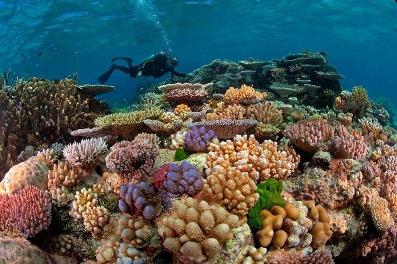 1--Красота подводного мира