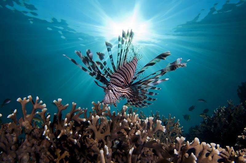 11-Красота подводного мира