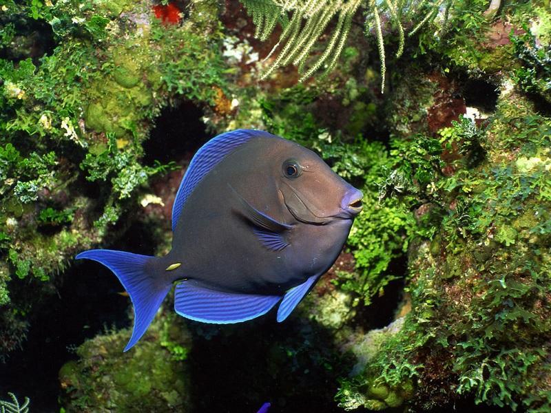 12-Красота подводного мира