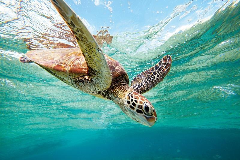 19-Морская черепаха. Подводная съемка
