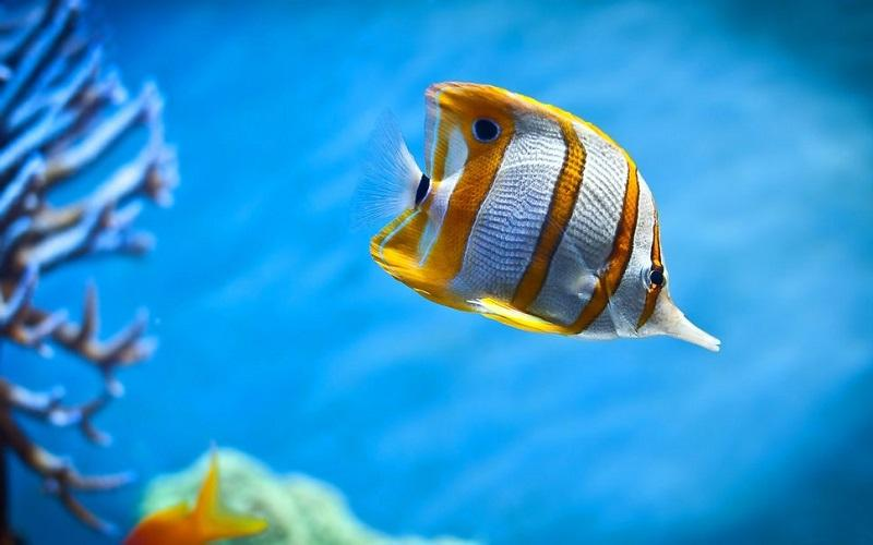 8-Красота подводного мира