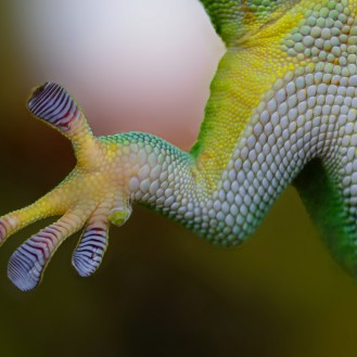 gecko-800887_1920