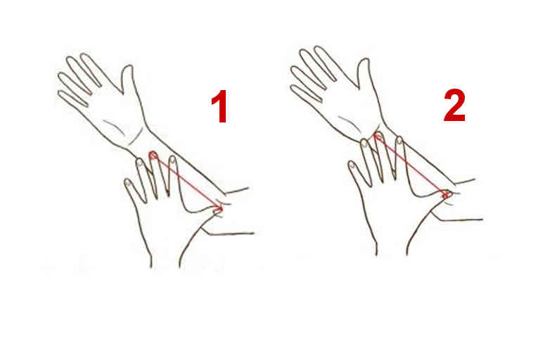 hands_palms_sizes