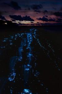 Светящийся пляж на Мальдивах (14 фото)