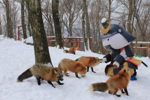 fox-village-3