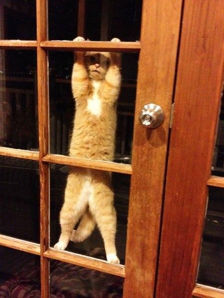 Домашние животные, которые должны попасть внутрь прямо сейчас
