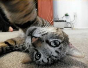 Кошки тоже любят селфи