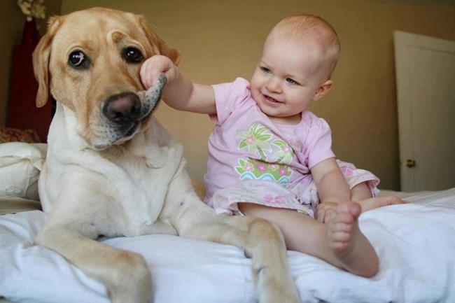 Собаки, которые даже не подозревают, насколько они огромны