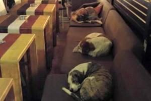 Греческое кафе стало ночлегом для бездомных собак