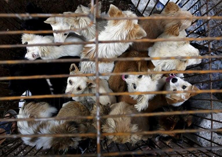 0Фестиваль поедания собак в Юлин