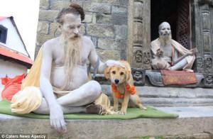 Рупи — первая собака-альпинист, которая покорила Эверест!