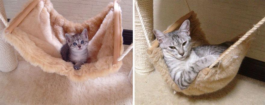 До и после, или как растут кошки