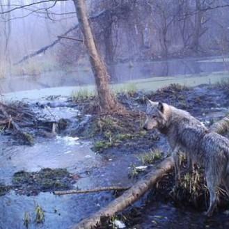 в чернобыльском лесу, шокировало весь мир! То, что ученые обнаружили