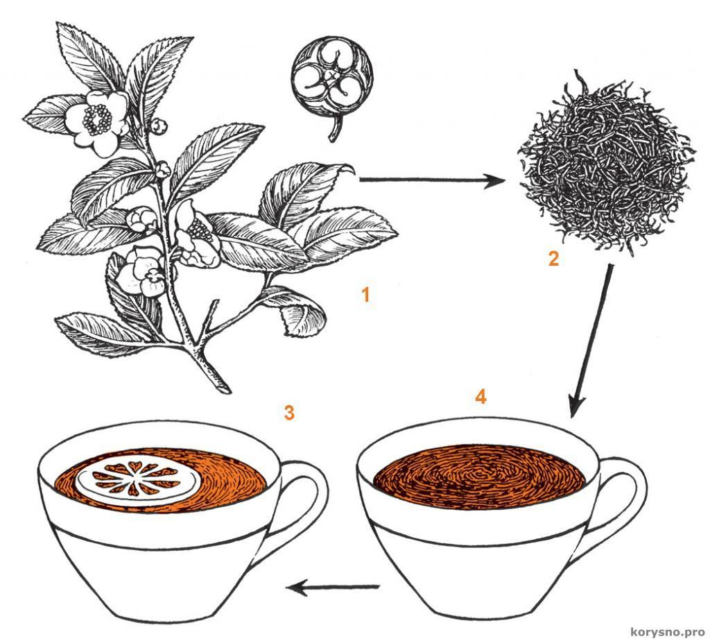 авная / Вопрос-ответ / Почему лимон осветляет чай? Почему лимон осветляет чай?