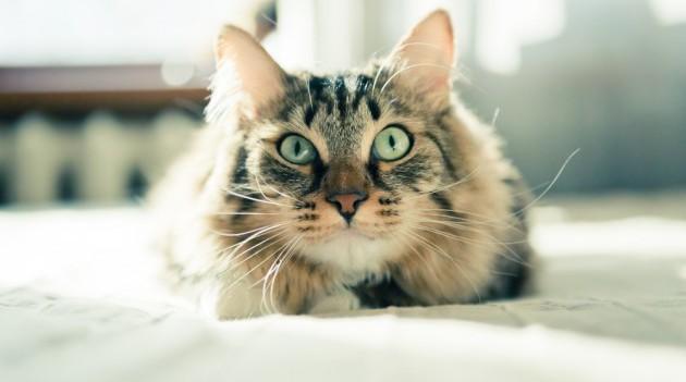 10-sovetov-dlya-vladelcev-cat