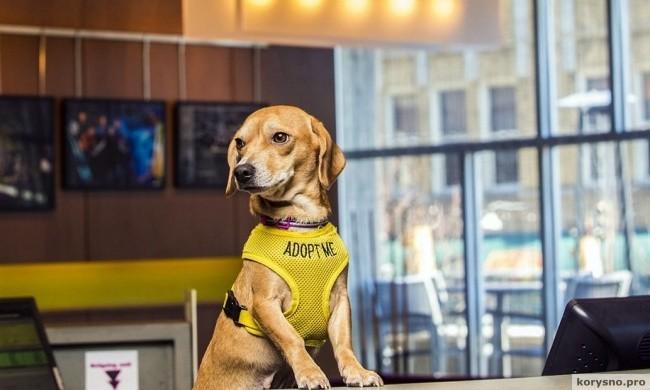 В этом отеле придумали отличный способ, как найти для собак новый дом