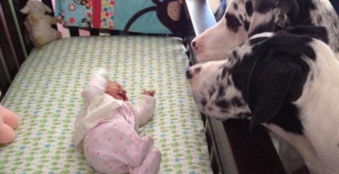 Родители оставили младенца с собакой - копия