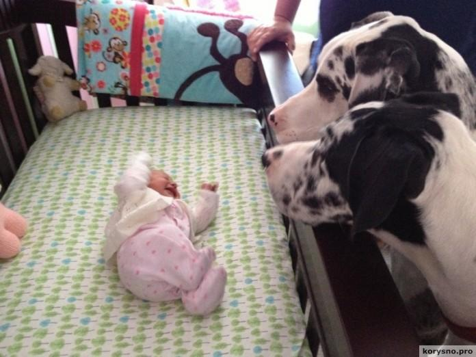 Родители оставили младенца с собакой