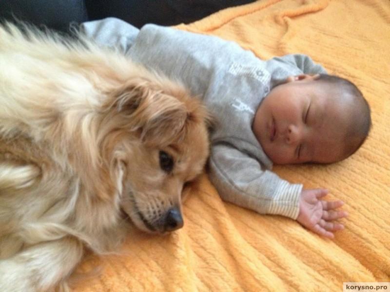 Родители оставили младенца с собакой1