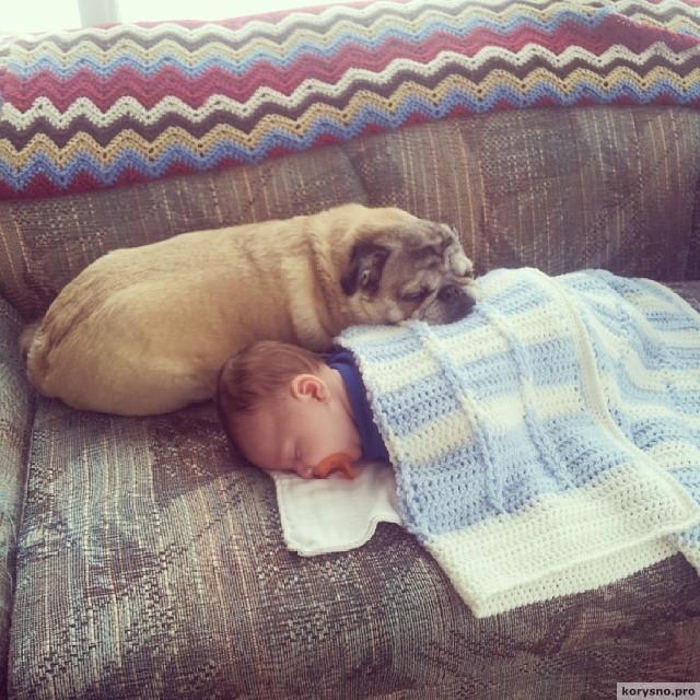 Родители оставили младенца с собакой3