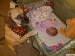 Родители оставили младенца с собакой4