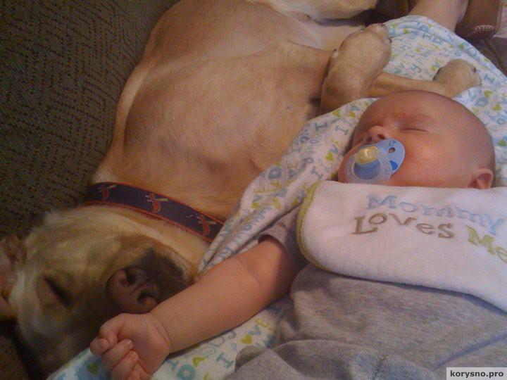 Родители оставили младенца с собакой6