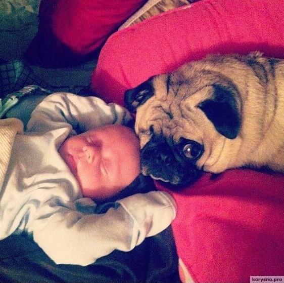 Родители оставили младенца с собакой8