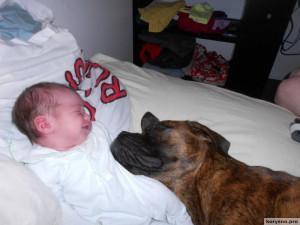 Родители оставили младенца с собакой9