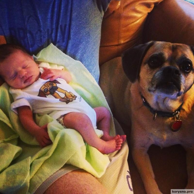 Родители оставили младенца с собакой91