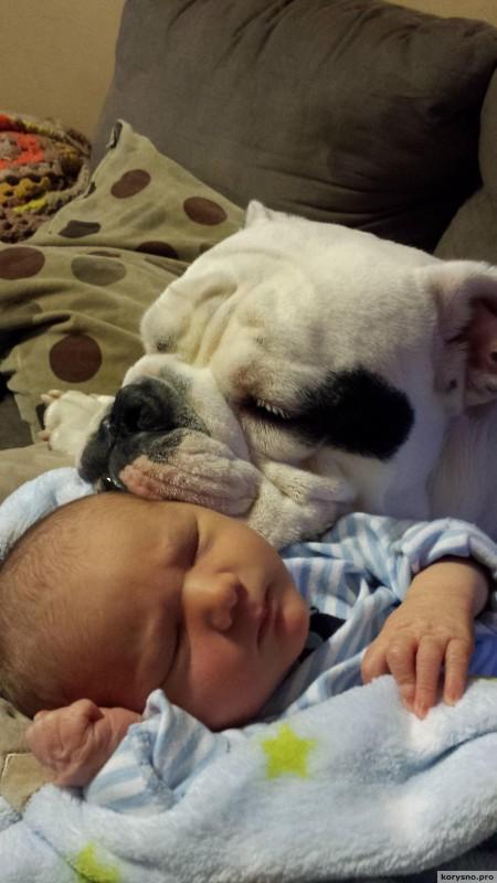 Родители оставили младенца с собакой92