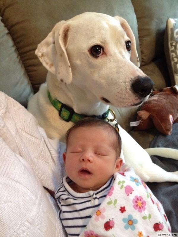 Родители оставили младенца с собакой94