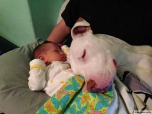 Родители оставили младенца с собакой95