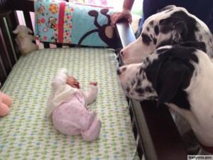 Родители оставили младенца с собакой96