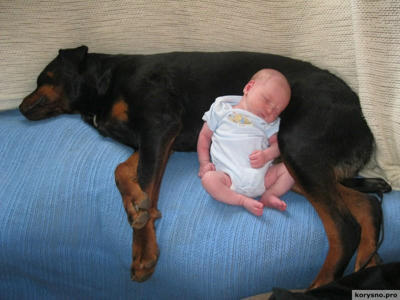 Родители оставили младенца с собакой97
