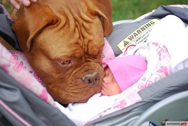 Родители оставили младенца с собакой98