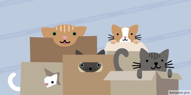 Как понять, что ваша кошка больна