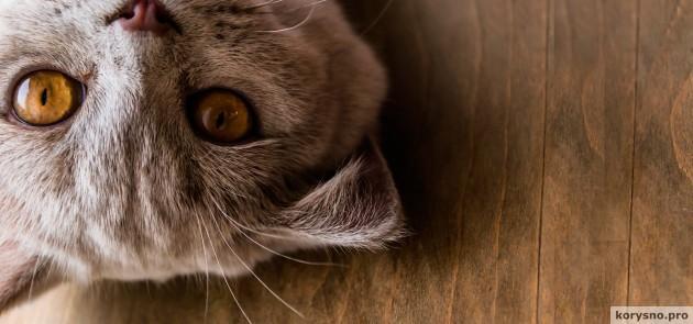 Как фотографировать кошку, чтобы фото умиляло не только вас