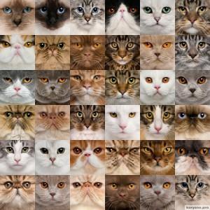 foto-cat1