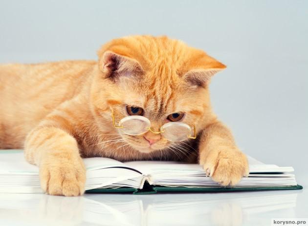foto-cat2