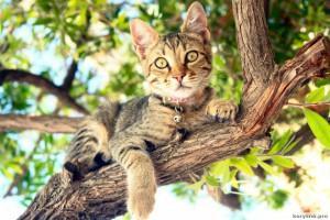 foto-cat3