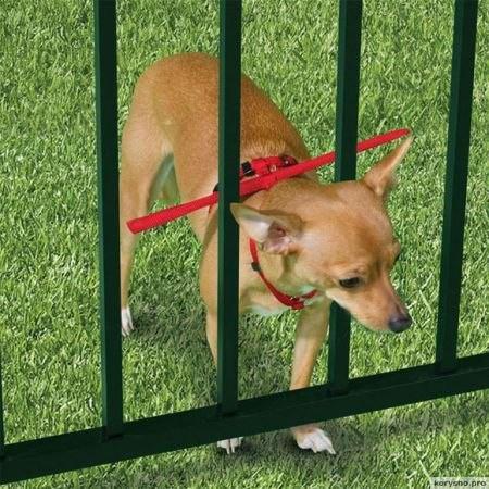 Гаджеты для собак, которые не дают им потеряться