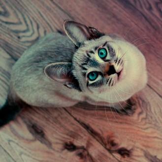 кошка индикатор кармы