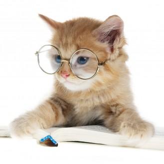 Кто самый умный из животных? Их интеллект поражает.
