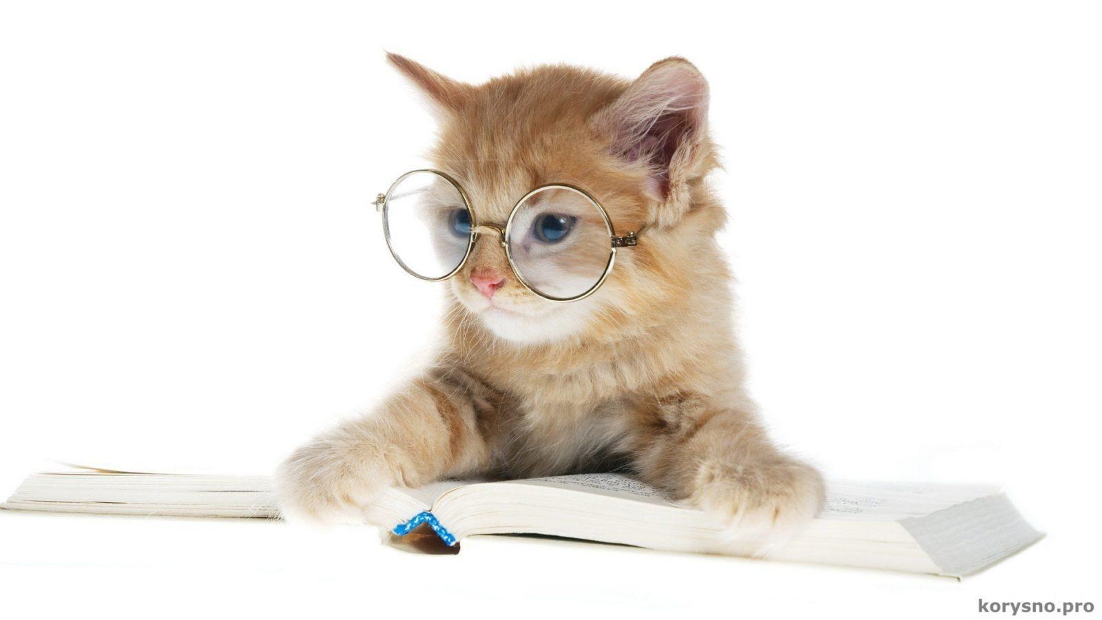 Кто самый умный из животных? Их интеллект поражает!