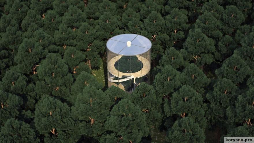 Потрясающий стеклянный дом построенный вокруг дерева в лесу