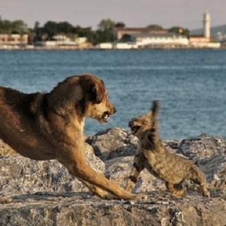 Кот решил проучить обидчика своего друга