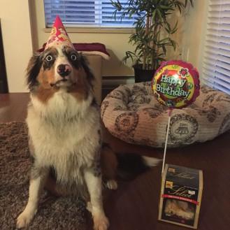 Домашние животные, которые имели лучшую вечеринку в день рождения, чем Вы